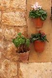 Pots accrochants d'usine avec des fleurs Photographie stock