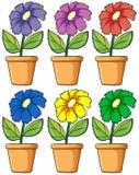 Pots avec les usines fleurissantes Photos libres de droits