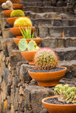 Pots with cactuses. Photography of pots with cactuses in Jardín de Cactus , Lanzarote, Canary Islands, Spain Stock Photos