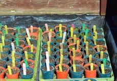 Pots in a cold frame Stock Photos