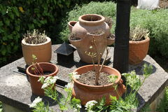 Pots of cold-sensitive plants Royalty Free Stock Photo