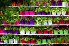 Pots colorés avec des fleurs sur le stellage photo stock