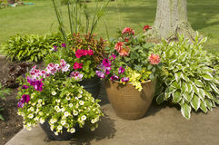 Pots of colorful flowers Royalty Free Stock Photography