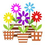 Pots with colorful vector flowers Stock Photo