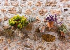 Pots d'usine sur le mur 1 Image stock