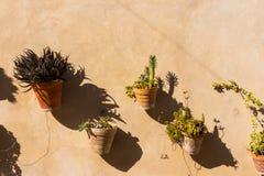Pots d'usine sur le mur 2 Images stock