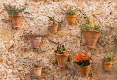 Pots d'usine sur le mur 3 Photographie stock libre de droits