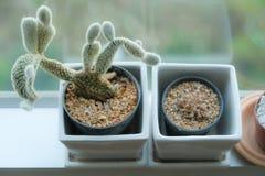 Pots de cactus Photographie stock libre de droits