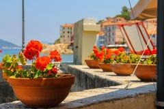 Pots de Decortive avec des fleurs sur le bord de mer sur Elba Island images stock