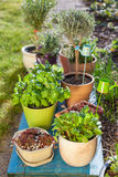Pots de fleur Photographie stock