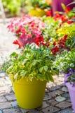 Pots de fleur Photographie stock libre de droits