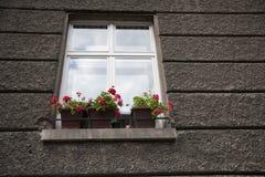 Pots de fleur au filon-couche de fenêtre Photographie stock