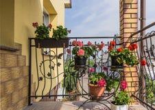 Pots de fleur avec des fleurs accrochant sur le gril de fer travaillé de la terrasse Image stock