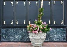 Pots de fleur avec les fleurs polychromes Image stock