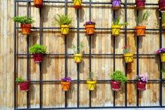 Pots de fleur colorés sur le mur en bois Photos stock