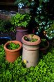 Pots de fleur contrastés Photographie stock libre de droits