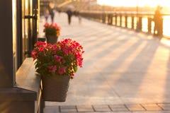 Pots de fleur extérieurs Photo stock