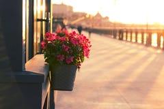 Pots de fleur extérieurs Images stock