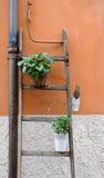 Pots de fleur pendant d'un escalier en bois Images libres de droits