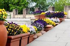 Pots de fleur rayant des étapes d'escalier Photos stock