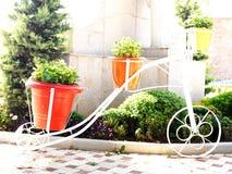 Pots de fleur sur la bicyclette photographie stock