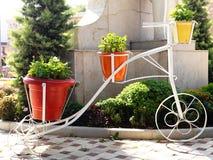 Pots de fleur sur la bicyclette photographie stock libre de droits