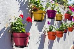 Pots de fleur sur le mur Photo libre de droits