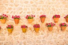 Pots de fleur sur le mur Photos stock