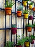 Pots de fleur sur le mur en bois Images stock