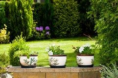 Pots de fleurs Images stock