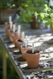 Pots de fleurs avec des labels de l'épargne en serre chaude Image libre de droits