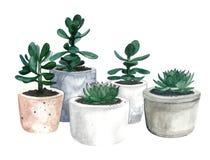 Pots de fleurs d'aquarelle images stock