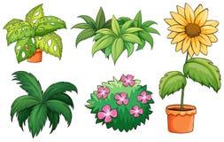 Pots de fleurs et usines Photo stock