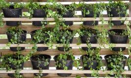 Pots de plante verte sur l'étagère Image stock