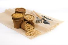 Pots de tourbe avec des graines et de petits outils de jardinage Images libres de droits