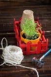 Pots de tourbe, fil rugueux, râteau et pousses vertes dans la boîte rouge Atterrissage de jeune plante Photo stock