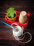 Pots de tourbe, fil rugueux, râteau et pousses vertes dans la boîte rouge Atterrissage de jeune plante Photo libre de droits