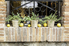 Pots decorated with lemons Stock Photo
