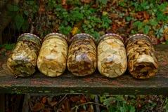 Pots en verre avec les champignons en boîte sur un conseil en bois photographie stock libre de droits