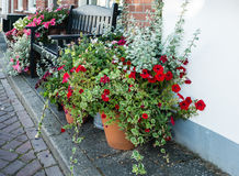 Pots with flowering plants in a Dutch street Stock Image
