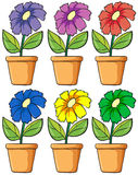Pots with flowering plants Royalty Free Stock Photos