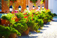 Pots with flowers are near the road. Royalty Free Stock Photo