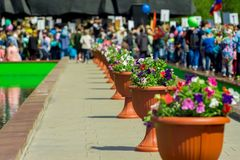 Pots of flowers are set in a row. On a large stones monument in memory of the fallen heroes of the war background a crowd of people with posters and flags stock photo