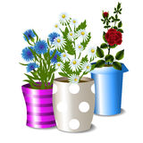 Pots with flowers Royalty Free Stock Image