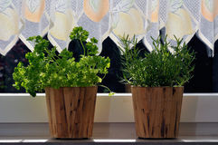 Pots with fresh herbs. Two fresh herbs pots (parsley and rosemary) on a window sill Stock Photos