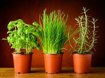 Pots with fresh herbs Stock Photo