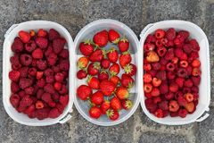 Raspberries and Strawberries. Pots of freshly picked berries Stock Image