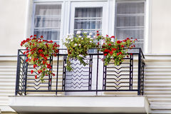 Pots of  geranium flowers on a balcony Royalty Free Stock Photos