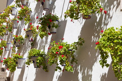 Pots of geraniums in Cordoba, Spain Royalty Free Stock Photos