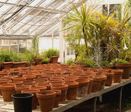 Pots in a greenhouse Stock Photography